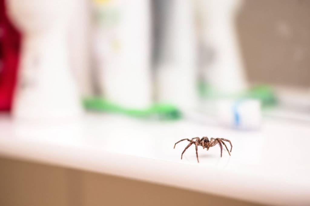 Arañas en la casa